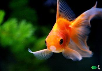Quelles espèces de poissons ?