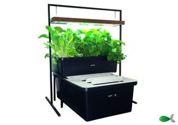 Les kits aquaponiques FishPlant